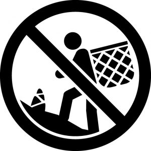 たけのこ 筍 タケノコ 狩り禁止マークのカッティングシートステッカー