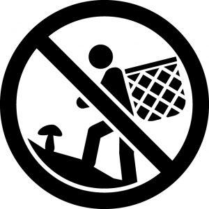 きのこ キノコ 茸 狩り禁止マークのカッティングシートステッカー